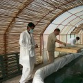 De la spiruline du Maroc avec Atlaspiruline