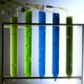 Le fameux pigment bleu de la spiruline : la phycocyanine