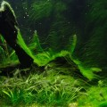 Les algues sont-elles des plantes ?