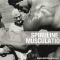 La spiruline, un allié de choix pour la musculation