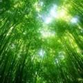 La philosophie de la naturopathie