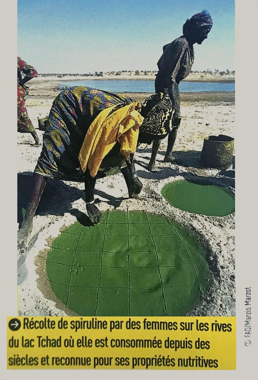recolte de spiruline au Tchad