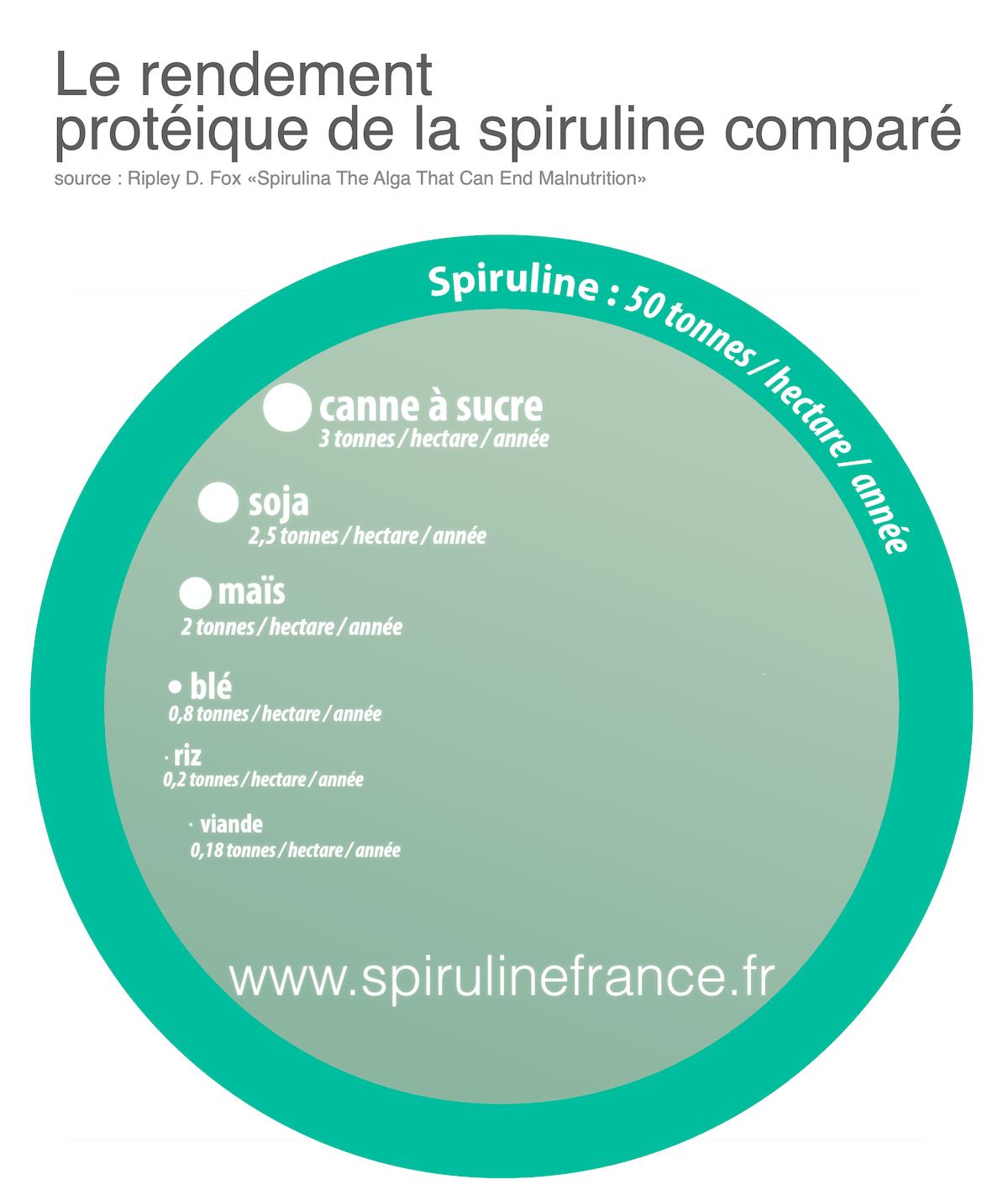 rendement protéique de la spiruline